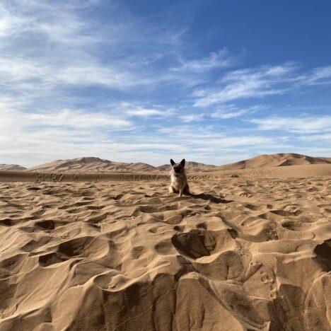 GUÍA PRÁCTICA ¿Cómo viajar con mascotas por USA?