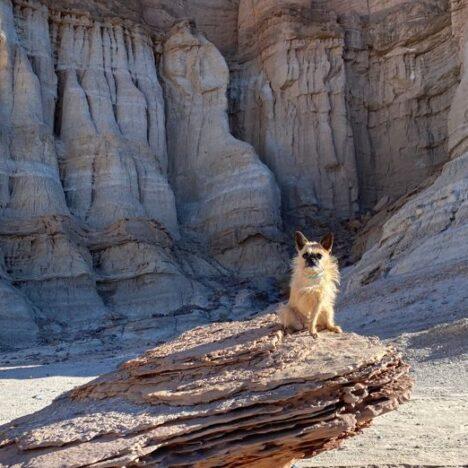 Viajes PET FRIENDLY: ¿Cuáles son los 5 mejores destinos para visitar con tu mascota?